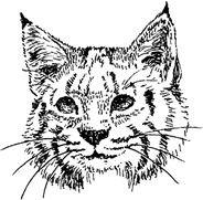 bv-bobcat